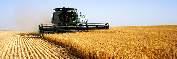 Combine harvester in a wheat field